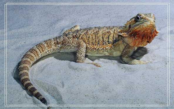 草龟喜欢吃哪些食物 乌龟拉稀
