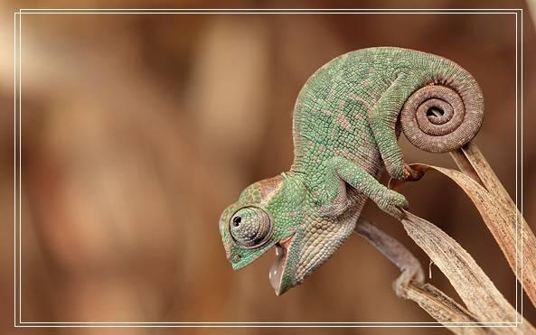 厦门宠物美容如果你找到这些生物那你发达了!10种地球上贵的动物(上)