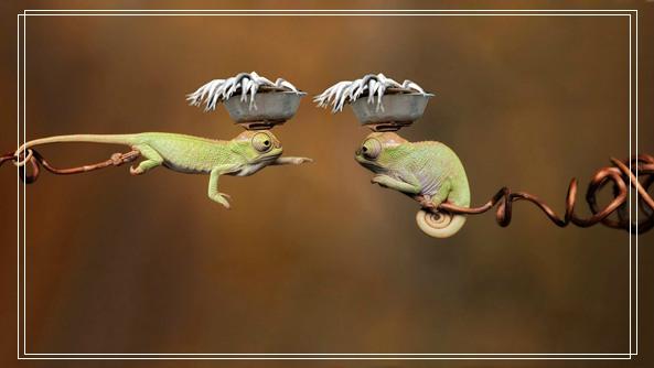 常见龟种的选择原则与要求 养金钱龟