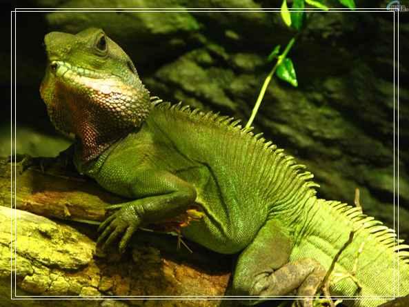 常见的淡水龟品种及养殖方法 石龟价格