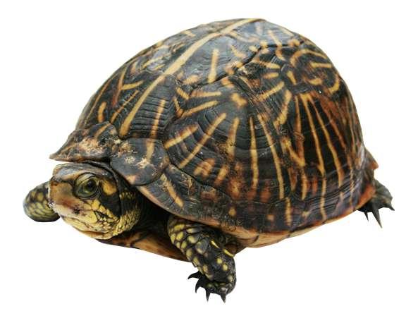 龟冬眠的环境布置