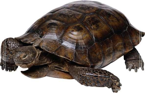 不同水龟的饲养方式有区别 黄喉水龟