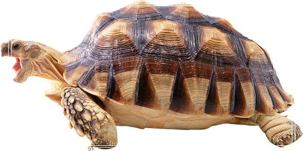 龟龟的天然理想食物谱 绿鬣蜥认主人吗