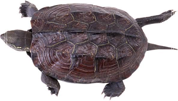 水龟缸的「图文」过滤系统