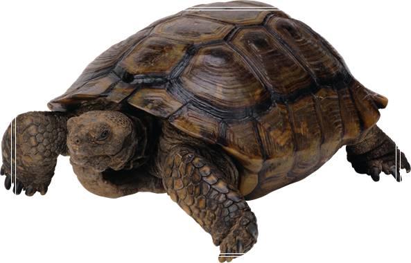巴西龟饲养水位建议