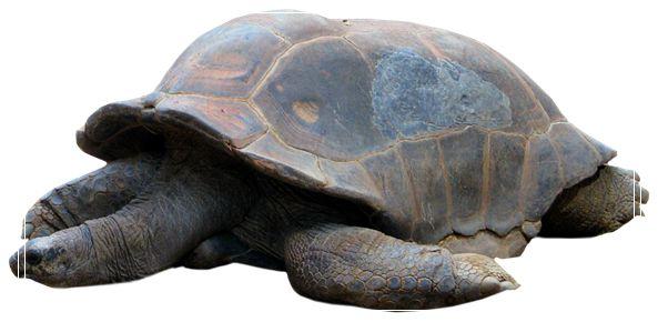 给龟龟喂食的误区 金钱龟苗价格