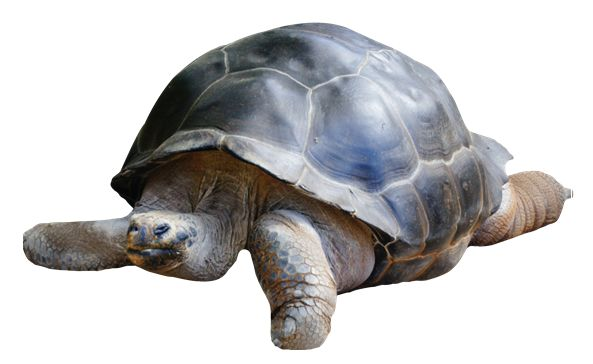 宠物龟运输过程的注意事项是什么「图文推荐」