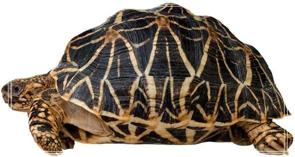 一个水乌龟半水龟家庭简易饲养环境「图文」