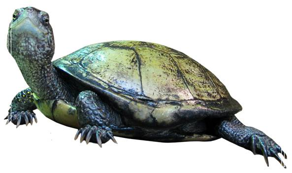 龟冬眠的环境布置「图文推荐」