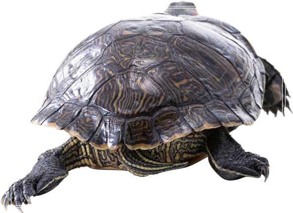 如何挑选场地建造养龟场?