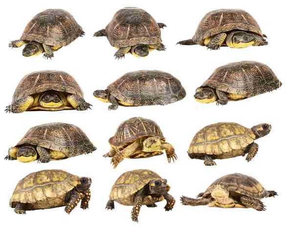 关于养龟水质的几「图文」点常见误区