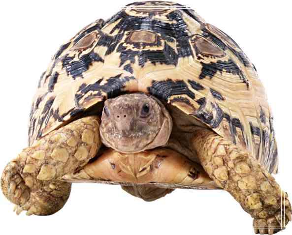 宠物龟的食物也需要消毒 石龟养殖