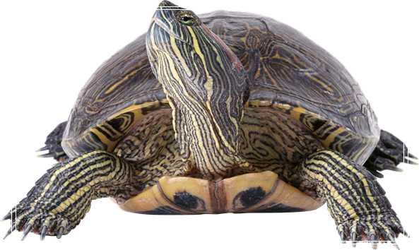 根据水判断养龟水质好坏