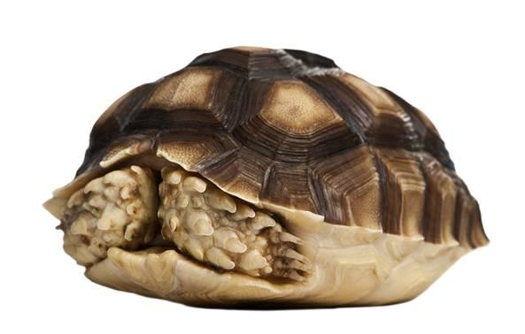 「图文推荐」能增加气温的陆龟器材