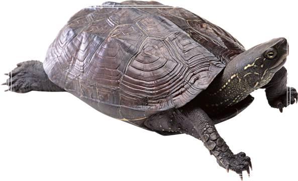 宠物龟加温饲养要注意哪些问题?「图文」