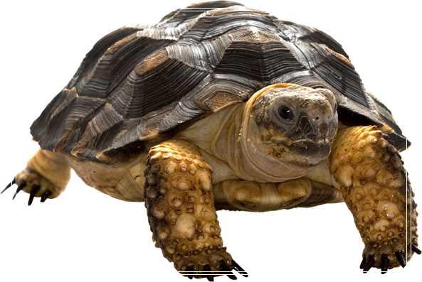 乌龟池塘生态养殖技术「图文」