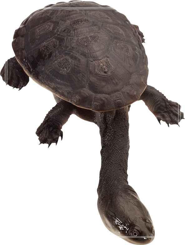 城市中适合饲养乌龟龟的地方「图文」