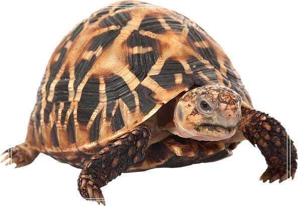 「图文推荐」能增加气温的陆乌龟器材有哪些?你知道养龟必备设备有哪些吗?