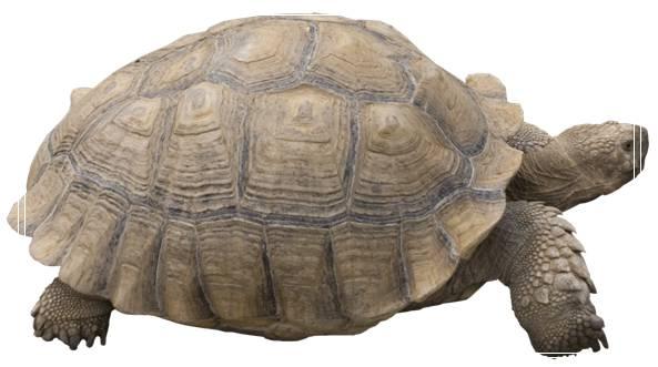 家庭式庭院养龟的方法