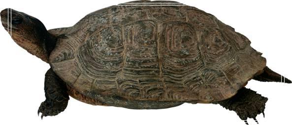 龟缸怎么除味?乌龟缸除藻用什么