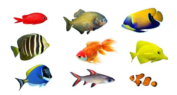水族箱鱼缸杀菌灯该如何选择和使用方法「图文」