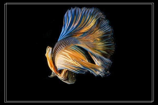 鱼缸底滤缸的作用「图文」