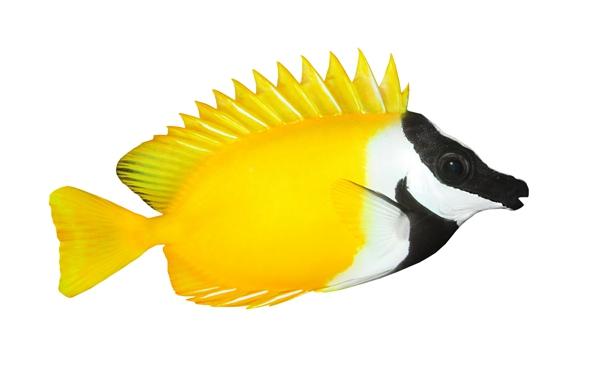 「组图」避免观赏鱼金鱼死亡的养殖方法有哪些