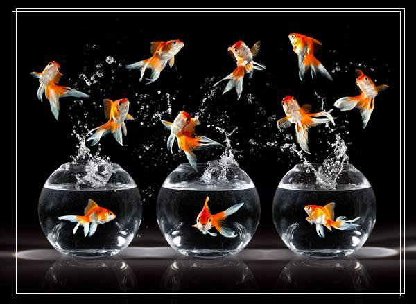 「组图」避免金鱼死亡的养殖方法有哪些