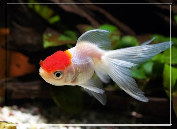 常见的鱼缸降温法