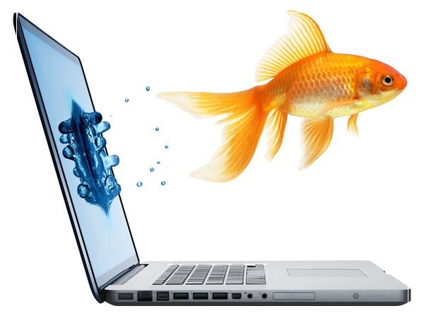 养鱼新趋势技术:高科技养鱼?