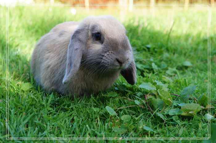 不要轻易招惹兔子