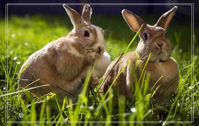 别碰我的兔子君的组图