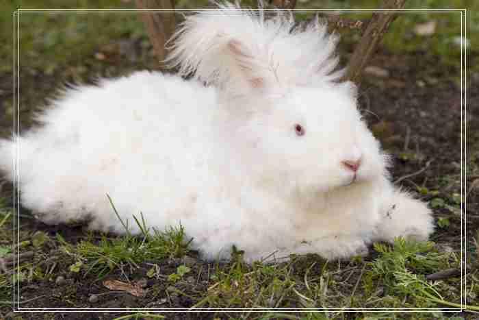 不同母兔的催方法