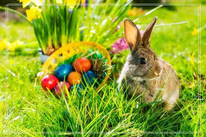 安哥拉兔是怪异动物「组图」之一?
