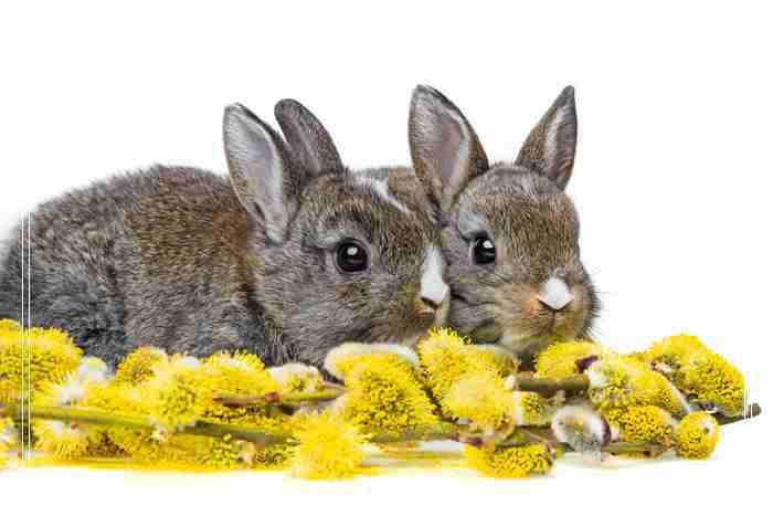 【美食攻略】自制兔兔吃的草饼,怎么可以吃兔兔
