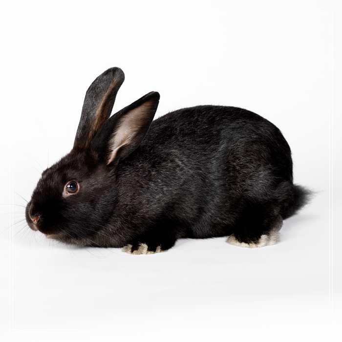 「图文推荐」【测试】测测你的动物性格