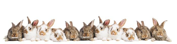 不要轻易招惹兔子好多