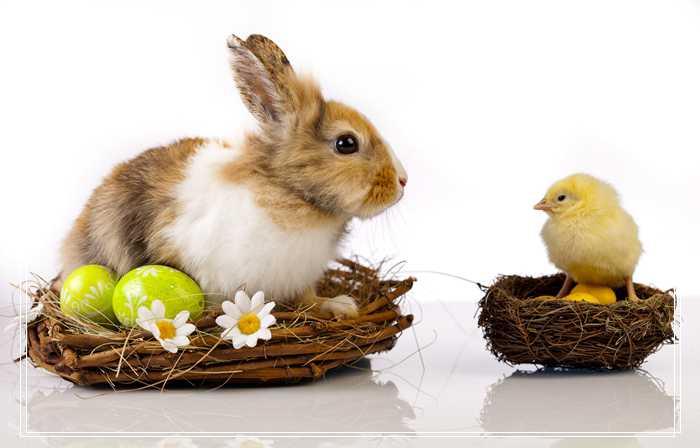 「组图」不同阶段的兔子对温度有何要求