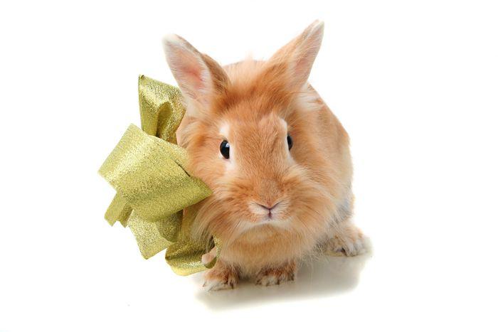 爱宝兔粮怎么样