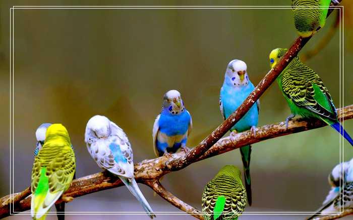 八哥鸟换毛期间注意「图文」什么