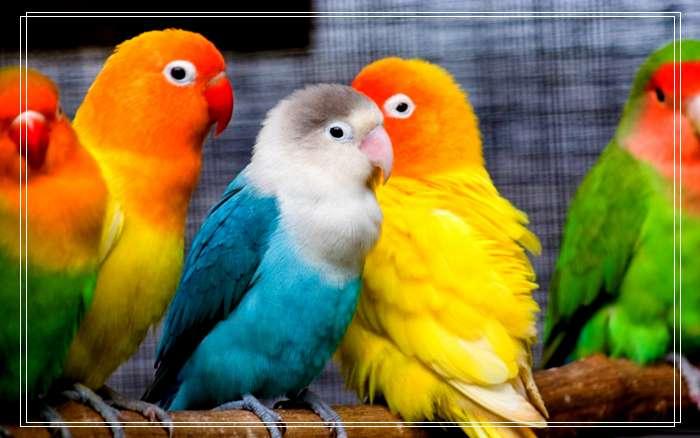 「图文推荐」暗绿绣眼鸟宠物萌萌品种简介,什么品种绣眼鸟贵?