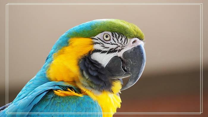 什么品种绣眼鸟贵?