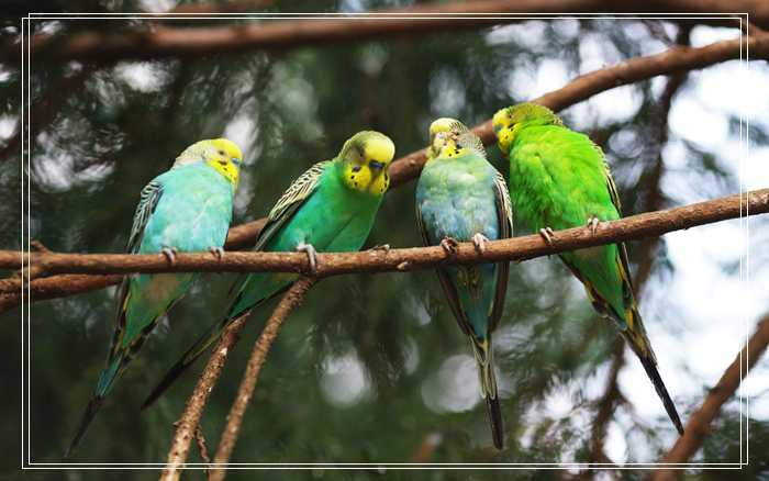 暗绿绣眼鸟的生活环境,暗绿绣眼鸟公母图片和经验分享