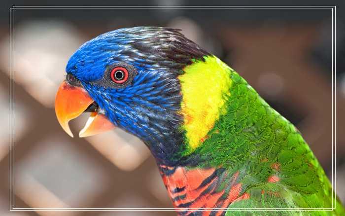 暗绿绣眼鸟形态特征,绣眼鸟叫